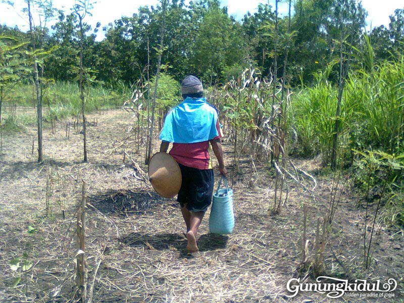 Bekal | Gading, Playen | by @ginuk17
